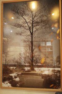 arbore da veira miss maridajes