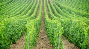 Reto de cuarentena: catar vino, Miss Maridajes